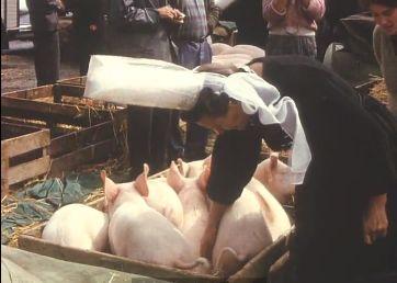 Scène du marché au cochon à Plonéour-Lanvern en 1962 ou 1963