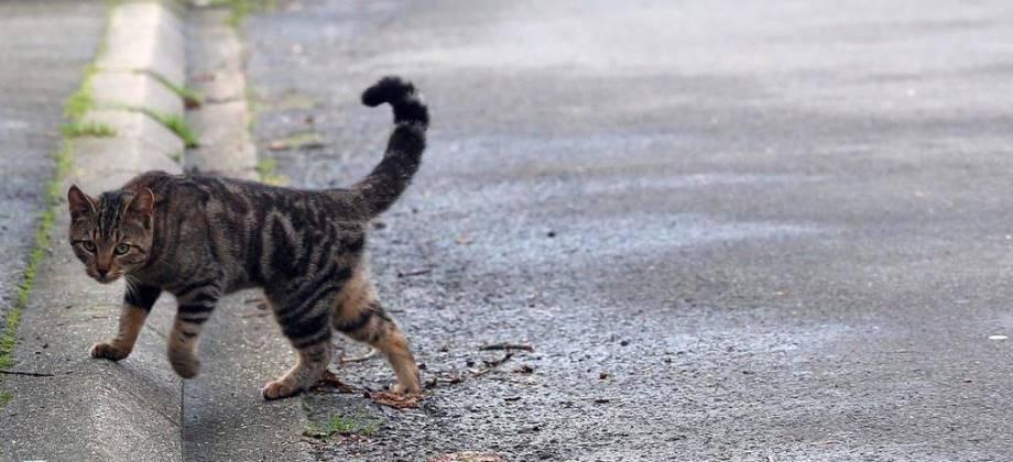 Capture de Chats Sauvages - septembre